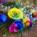cách làm hoa hồng 7 màu