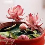 hướng dẫn tỉa hành tây thành bông hoa sen đẹp mắt