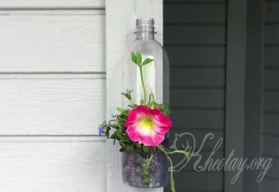 Cách trồng hoa trong chai nhựa