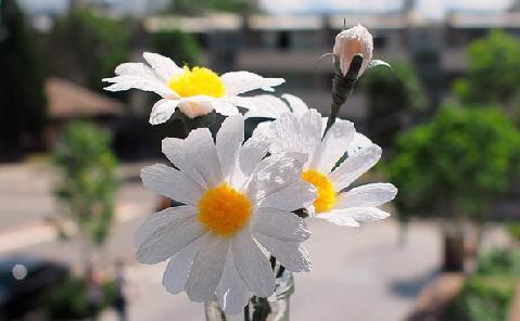 Cách làm hoa cúc bằng giấy đẹp