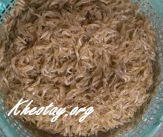 Cách làm bột nêm tại nhà từ tôm